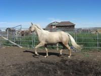 <h2></h2><p>BOOMER is a 2011 registered QH filly. She was rescued from a neglectful home and we got her from the person who saved her. She's owned by a lady who fell in love with her the first time she saw her. She'll board with us for a while, and then will move her to an acreage in the spring.<br></p>