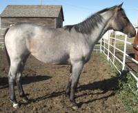 <h2></h2><p>MARA is a 2008 registered quarter horse filly. She came from an auction in Sept 09. She's very quiet and loving and follows us everywhere. Her owner is a young girl who will board her here to learn how to train her, and then she'll move her to a boarding stable closer to her home.<br></p>
