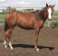 <h2></h2><p>MOON is a 2009 paint/mustang cross filly who is also Tango's daughter. She is now owned by the lady who owned Chloe. She is a very loving filly and just fills her new owners life with happiness. Her new name will be Bella Moon.<br></p>