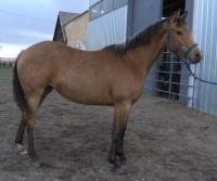 <h2></h2><p>KODAK is a 2011 reg. QH filly. She's now been placed with one of our volunteers who's been working hard with her for the last year, and will go to her new home soon.<br></p>