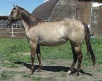 <h2></h2><p>GYPSY is a 2011 grade QH filly that we outbid the meat buyer at an auction for. She's been handled by many people, but never connected with anyone. Her owner is a 13 yr old girl who adores her, and Gypsy absolutely loves her and will do anything for her.<br></p>