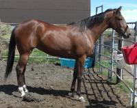 <h2></h2><p>SIENNA is a 2008 reg. Standardbred filly who was going to be shipped for meat. A lady who knew the owner made arrangements with him to try and place her, and that's how she came here. She is now owned by a special mother and daughter, who absolutely adore her. Sienna will be boarded here long term for her owners to learn how to train her.<br></p>