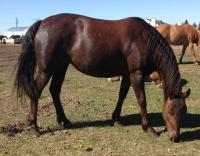 <h2></h2><p>NEEKA is a 2012 Quarter Horse filly. She's a half sister to Noel. She was one of the horses in the Rescue Horse Makeover at the 2014 Jonathan Field & Friends Event, and she was the horse Jonathan worked with. She's now owned by a lovely lady who will board her here for a while to learn more about her horse.<br></p>