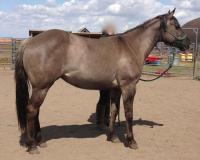<h2></h2><p>DANI is a 2011 QH filly who was an owner surrender. Her new owner has already taken some groundwork lessons with her, and will be continuing with lessons once she's at the boarding stable.<br></p>
