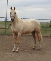 <h2></h2><p>FROSTY is a 2014 QH filly we got from a meat buyer. She's now owned by a young girl who already has broke horses, but wants to train her own and have that special bond.<br></p>