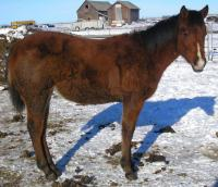 <h2></h2><p>TROUBLE is a 2010 registered QH filly from the auction. She was weaned at the auction and her mother went for slaughter. She's very friendly and loves people. Her new owner is the mother of the girl who owns Sundance. It's so nice the two horses will still be together. <br></p>