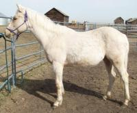 <h2></h2><p>GEM is a 2008 grade quarter horse filly who is a half sister to Taffy and Boo. She is now owned by a young girl, who has been working with her for a year. She will be staying here so her new owner can continue to learn how to train her.<br></p>