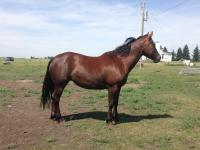 <h2></h2><p>NEEKA is a 2012 quarter horse filly. She was one of the horses we took to the Jonathan Field and Friends event in 2014. She's been saddled a few times and is doing well with her training. </p>
