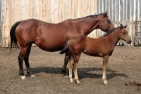 <h2></h2><p>This mare and foal arrived after being sold to a meat buyer. We named the mare Mandy, the filly doesn't have a name yet.</p>