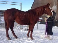 <h2></h2><p>CASSIDY is a 2006 Polish Arab mare. She badly injured both back feet in barbed wire and her owner didn't bother to care for the wounds, they were at least 3 months old when she arrived. Her feet were bleeding and raw and hadn't been trimmed in a long time. Because of a good friend who wouldn't rest until this horse was safe, we finally were able to purchase her and get her the help she needs. Her wounds are healing, but it's going to take time until she's totally sound.<br></p>