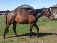 JACKSON is a 2012 gelding who was born here. He's now with a lady who will train him for pleasure riding.